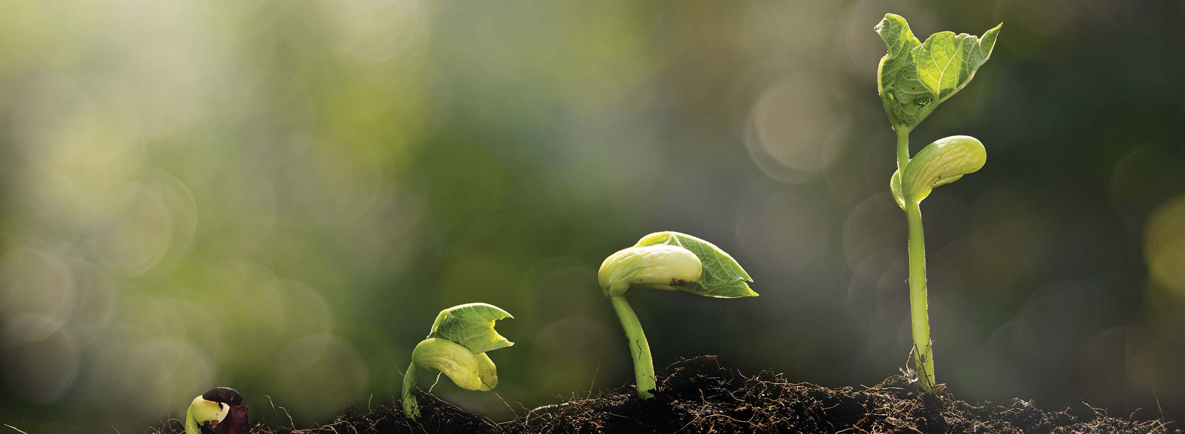 plant seedlings of various sizes growing, representing how nonprofits can raise more money