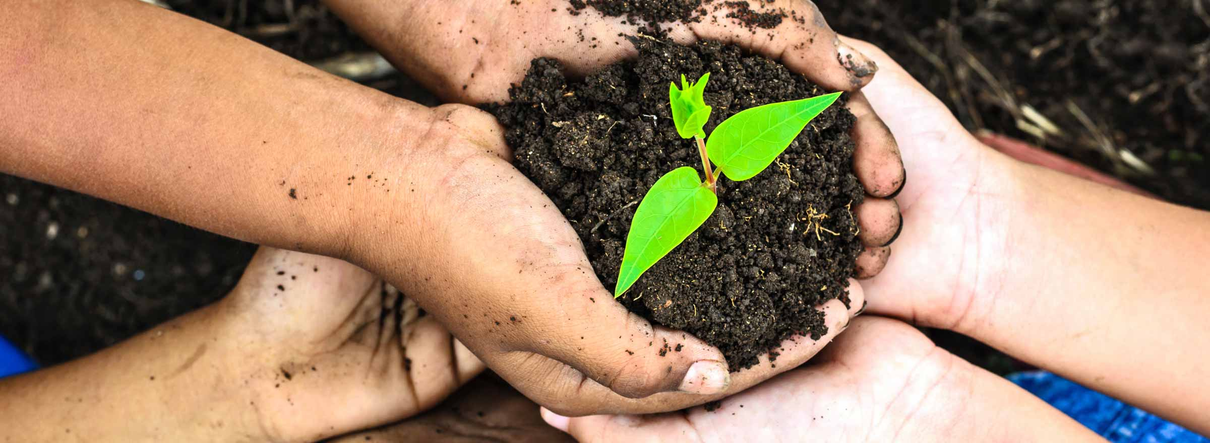 hands holding soil with a young plant