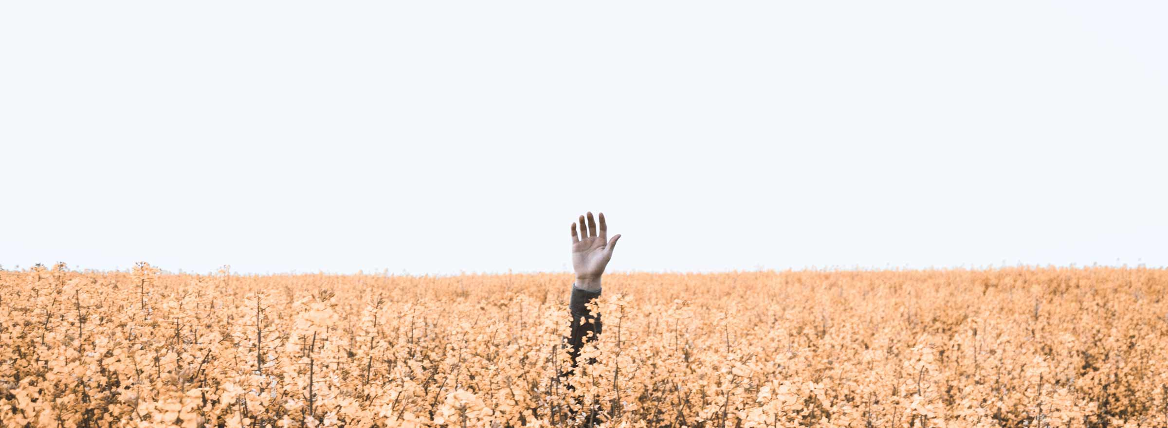 a person's hand reaching up from a field of flowers, symbolizing the need for help from a nonprofit app