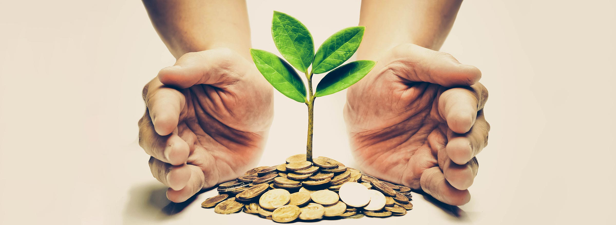 person's hands cupped around a seedling on top of coins