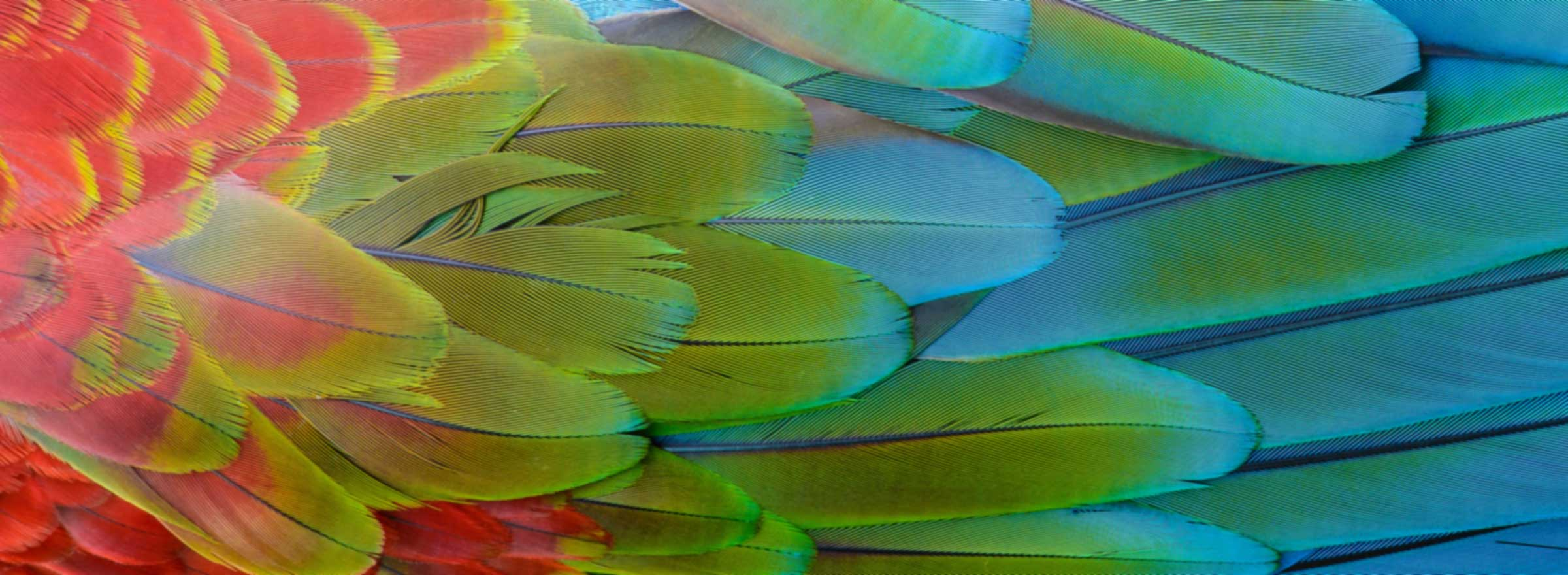 a close-up of a beautiful, multi-colored bird wing