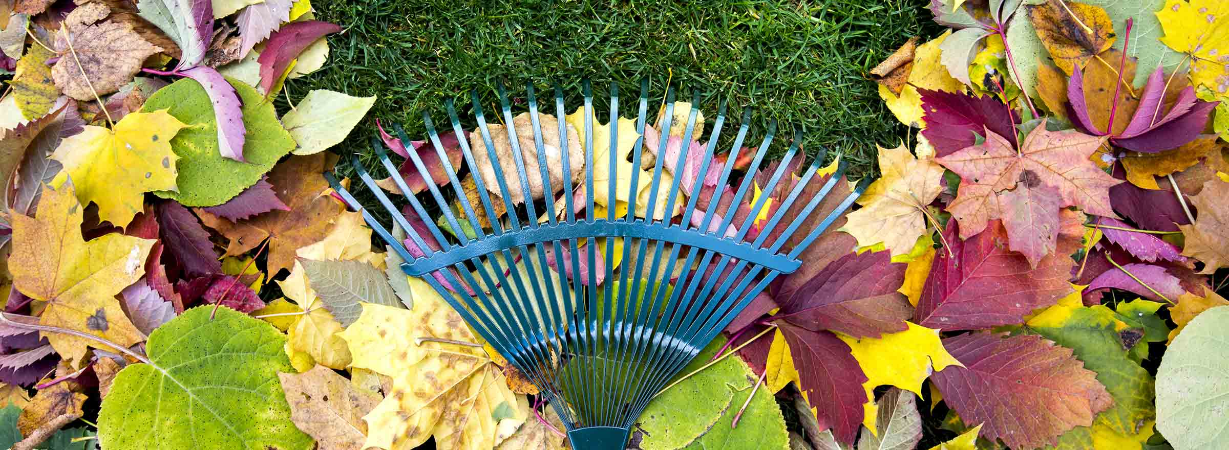 a rake gathering up autumn leaves on the ground, symbolizing how nonprofits can readapt to survive the expected decrease in donations