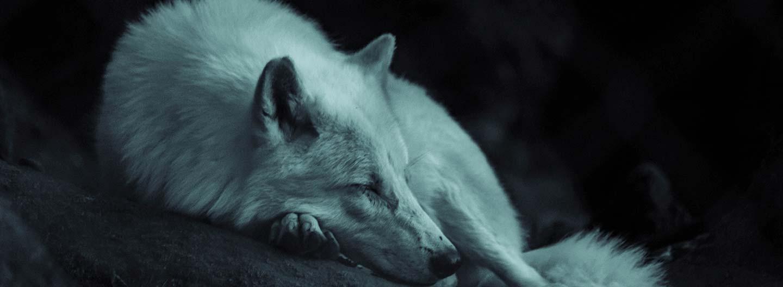 Storymakers: The Wild Animal Sanctuary