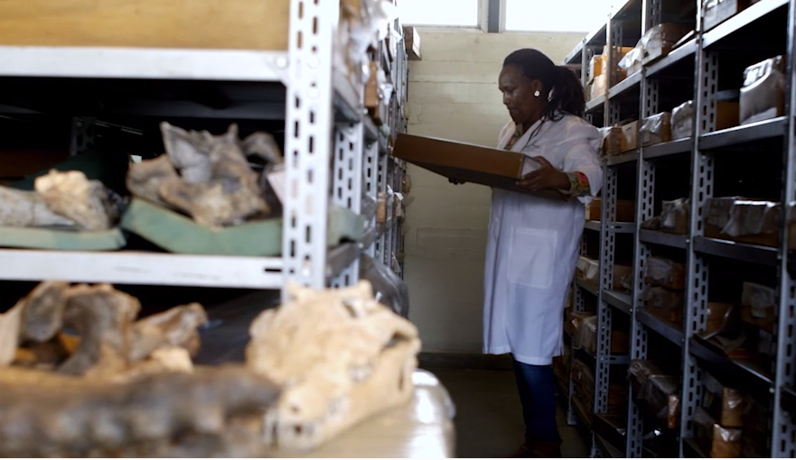 person reviewing artifacts in a storage facility
