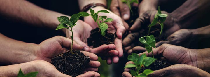 Nonprofit Harnesses Tech to Plant Tens of Thousands of Trees